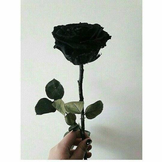 عکس گل رز سیاه برای پروفایل دخترا