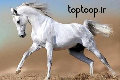 تعبیر خواب شیر دوشیدن دیگران از اسب