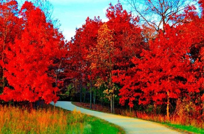 عکس پروفایل از منظره های بهاری قرمز رنگ