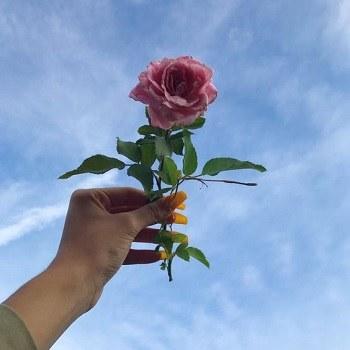 عکس پروفایل دخترانه شاخه گل رز قرمز و زیبا