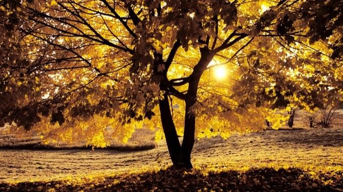 تصویر زیباترین منظره ی پاییزی برای پروفایل