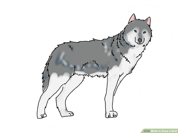 رنگ آمیزی نقاشی گرگ