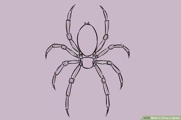 تکرار مرحله بالا در سمت مخالف بدن عنکبوت