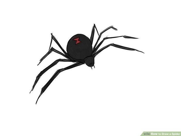 رنگ آمیزی نقاشی عنکبوت سیاه