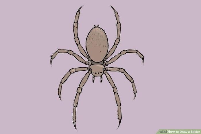 رنگ آمیزی نقاشی عنکبوت ساده