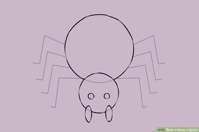 پر رنگ کردن خطوط اصلی بدن عنکبوت