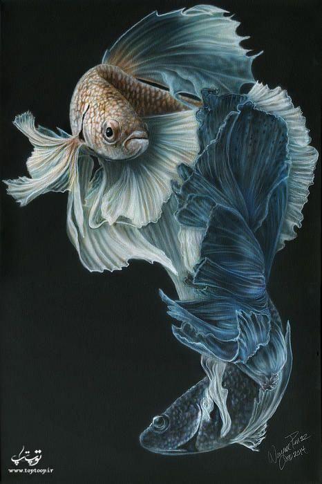 عکس ماهی مشکی خوشگل