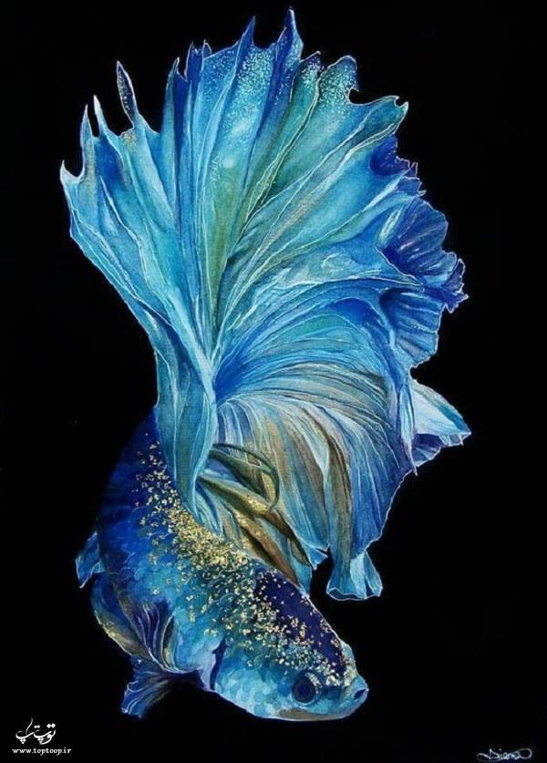 عکس ماهی فایتر آبی