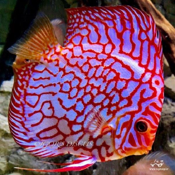 عکس ماهی های رنگارنگ و خوشگل