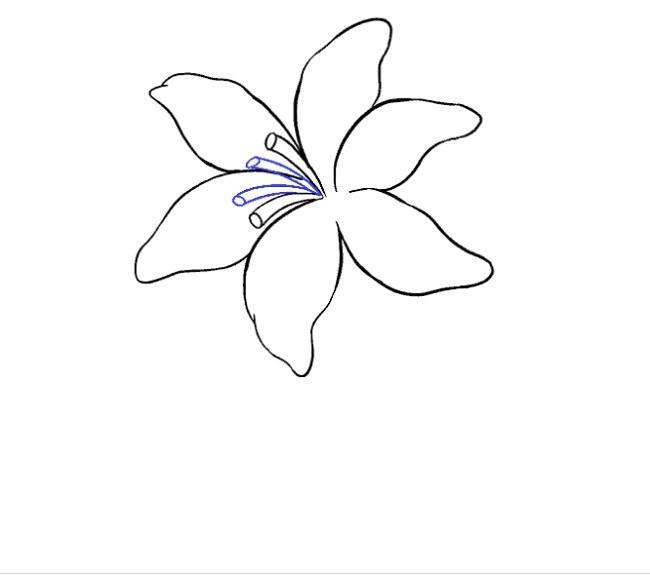 نقاشی گل سوسن مرحله یازدهم