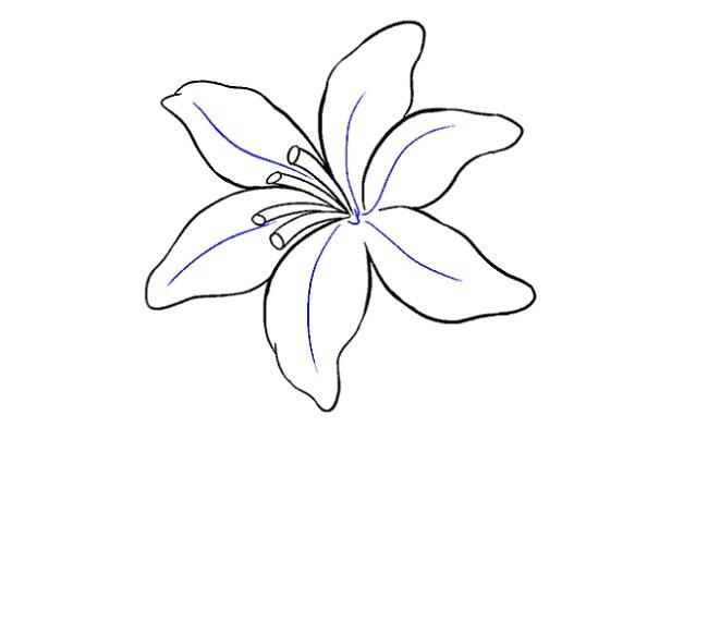 نقاشی آسان گل سوسن مرحله سیزدهم