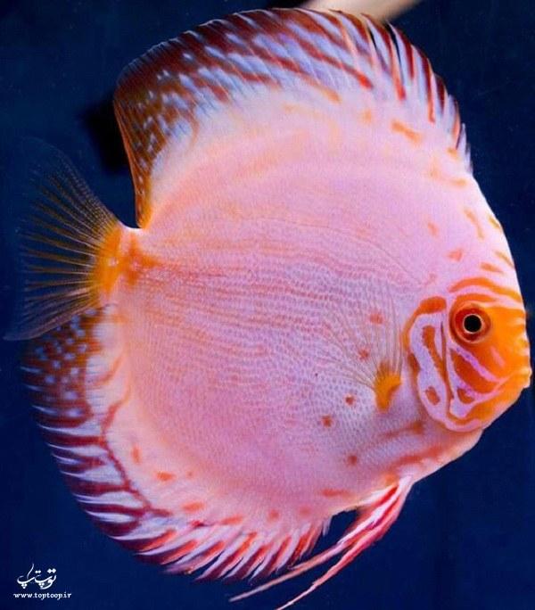 گلچینی از قشنگ ترین عکس ماهی های جهان