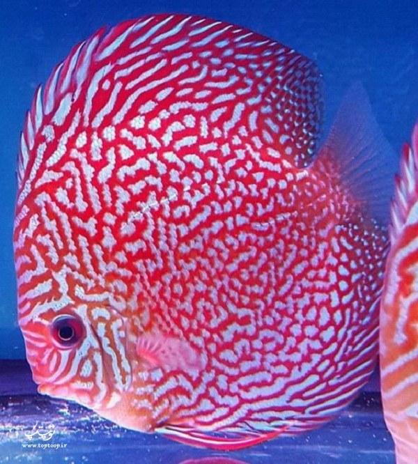 تصاویر ماهی های دریایی و خوشگل