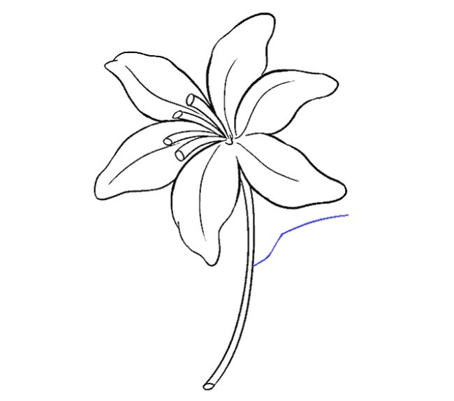 کشیدن نقاشی گل سوسن مرحله پانزدهم