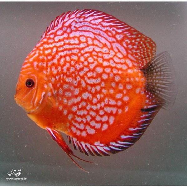 عکس ماهی های دیدنی و خوشگل دنیا