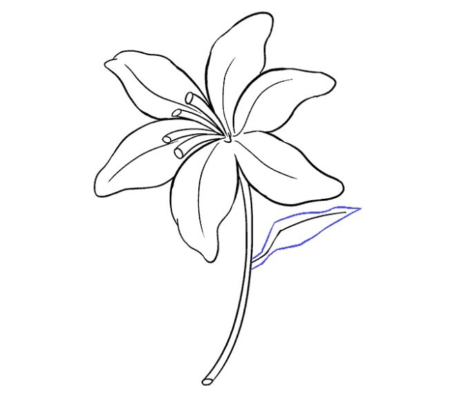 کشیدن نقاشی گل سوسن مرحله شانزدهم