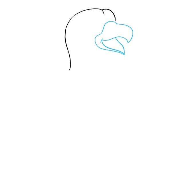 نقاشی شاهین برای کودکان مرحله 2