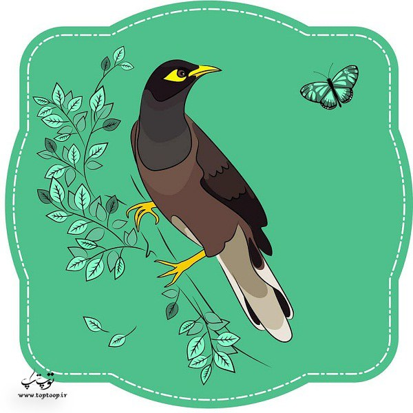 عکس نقاشی شده مرغ مینا