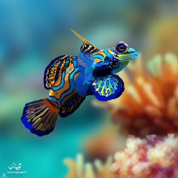 عکس ماهی زیبا در زیر دریا