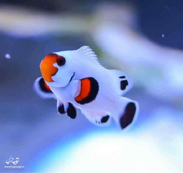 عکس ماهی زیبا و عجیب