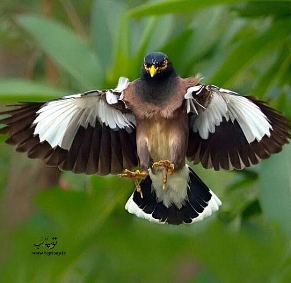 عکس مینا سخنگو در حال پرواز
