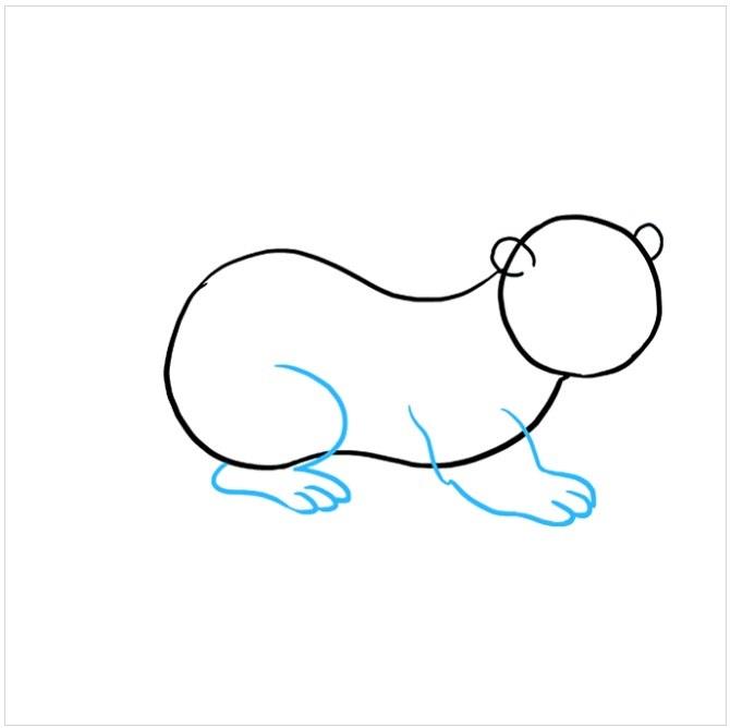 نقاشی سمور دریایی برای کودکان مرحله چهارم