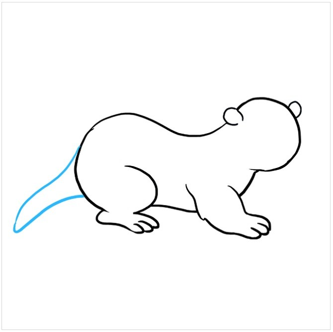 نقاشی کشیدن سمور دریایی مرحله ششم