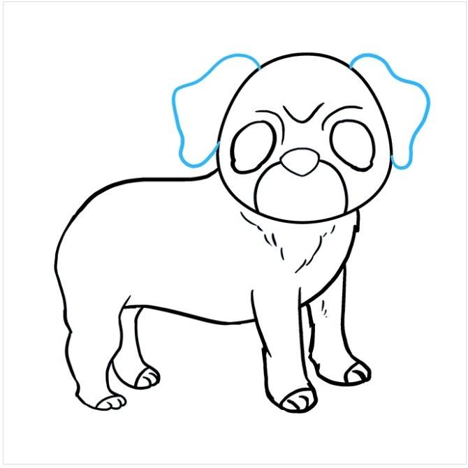 آموزش رسم سگ پاکوتاه مرحله هشتم