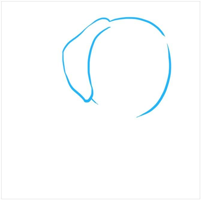 آموزش نقاشی توله سگ پاپی مرحله اول