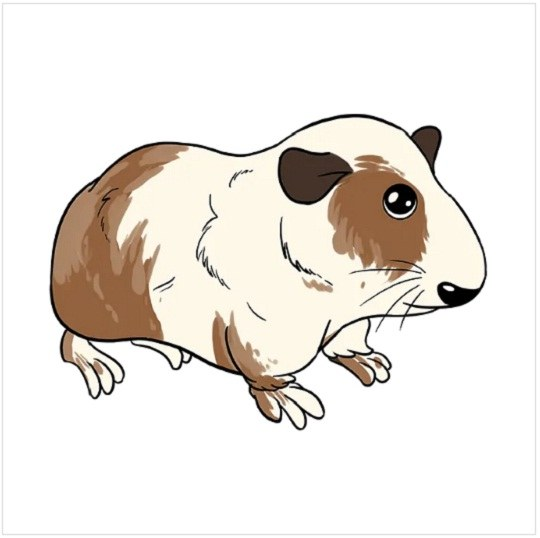 رنگ آمیزی نقاشی خوکچه هندی