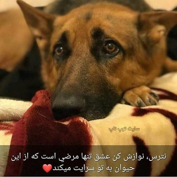عکس نوشته مهربانی در حق حیوانات