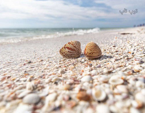 متن درباره ساحل و صدف