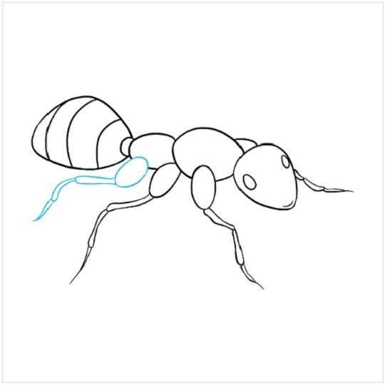 کشیدن نقاشی مورچه مرحله هشتم