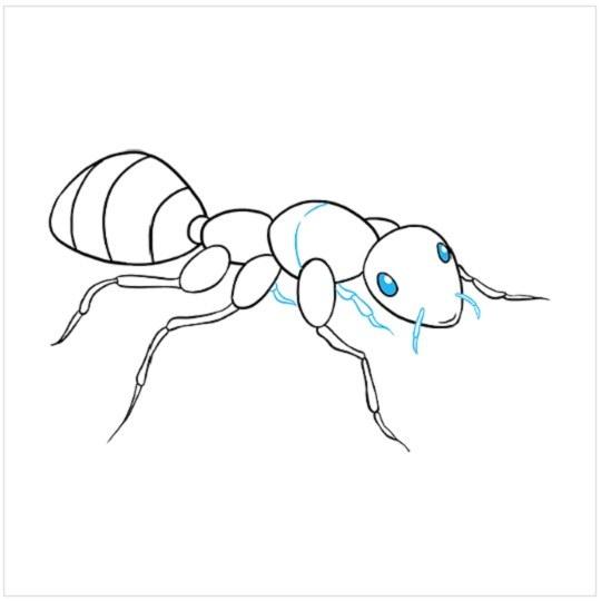 روش کشیدن نقاشی مورچه مرحله نهم