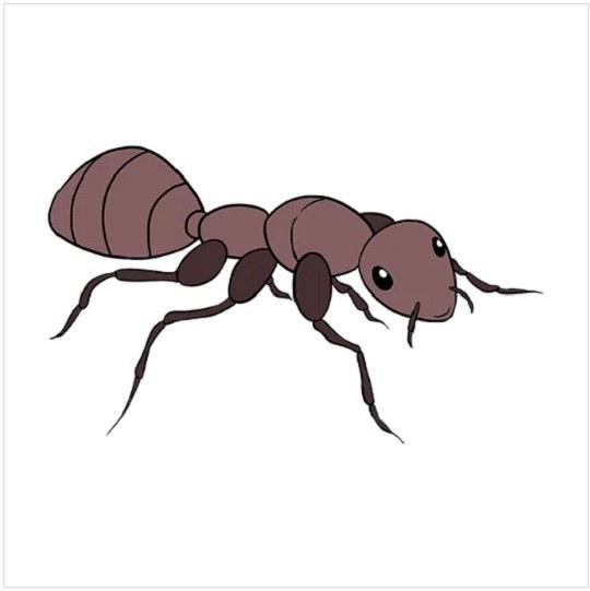 رنگ آمیزی نقاشی مورچه