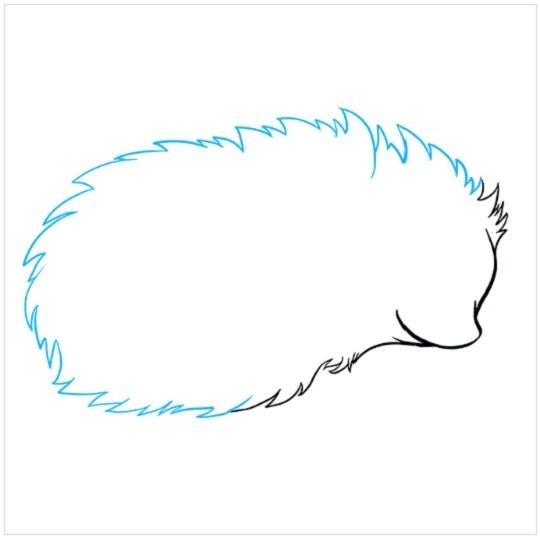 آموزش نقاشی جوجه تیغی مرحله سوم
