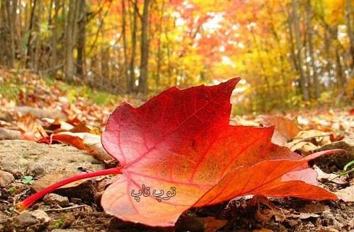متن زیبا درباره پاییز