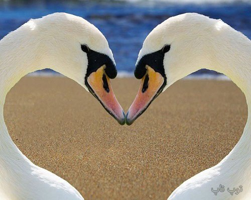 دلنوشته ساحل دریا عاشقانه