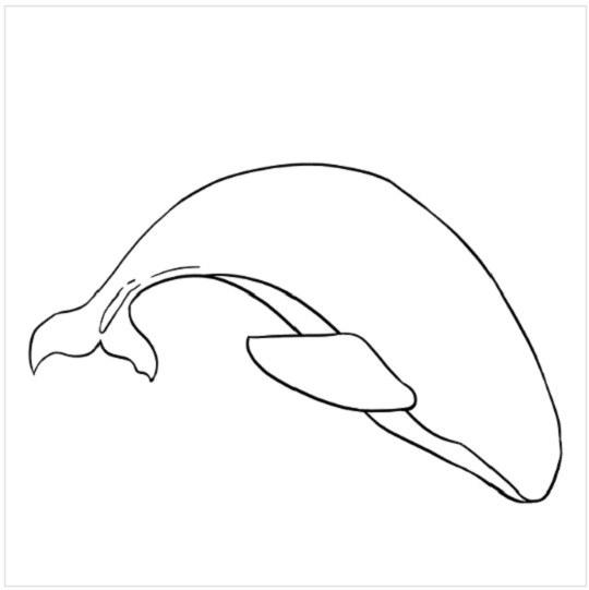آموزش نقاشی نهنگ برای بچه ها مرحله ششم