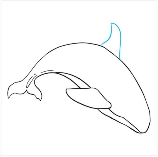 آموزش نقاشی نهنگ مرحله هفتم