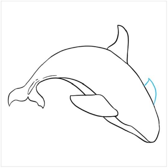 کشیدن نقاشی نهنگ مرحله هشتم