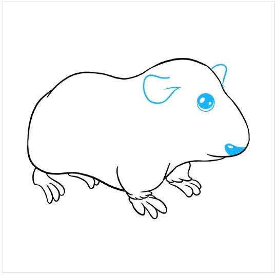 آموزش نقاشی خوکچه هندی مرحله هشتم