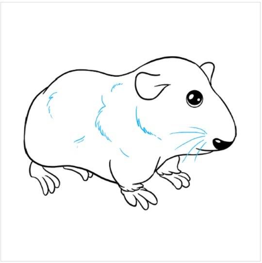 نقاشی خوکچه هندی برای کودکان مرحله نهم