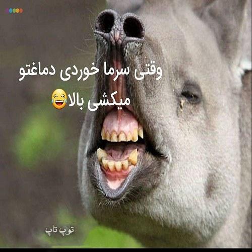 عکس نوشته خنده دار سرماخوردگی