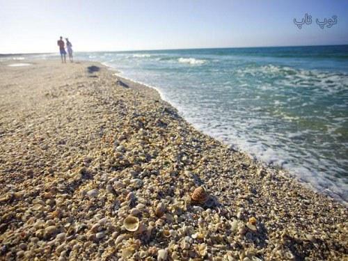 متن در مورد ساحل و صدف