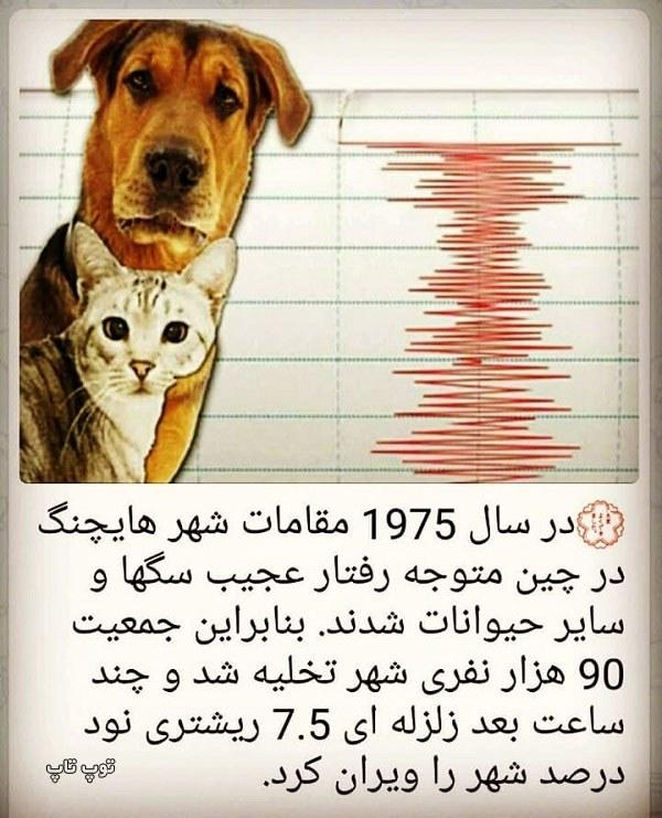 عکس حمایت از حیوانات بی سرپرست