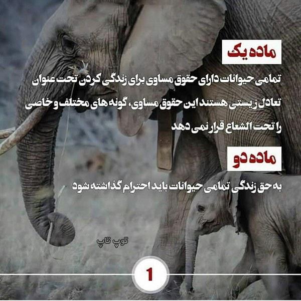 تصاویر زیبای حمایت از حیوانات