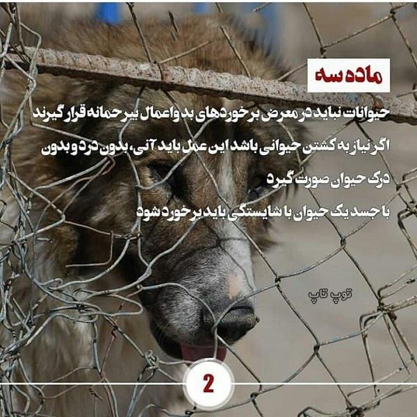 حمایت از حیوانات عکس