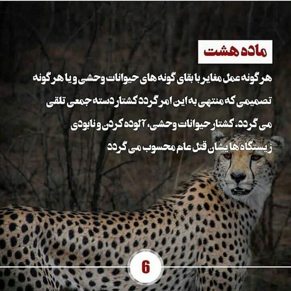 عکس حمایت از حیوانات جنگل