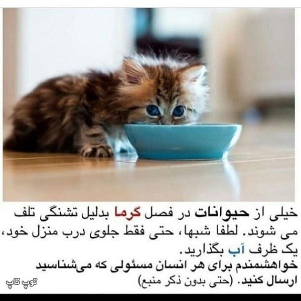 عکس نوشته مراقبت از حیوانات